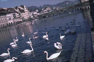 photo: the river through Lucerne
